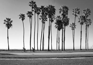 palm trees bw 360x250